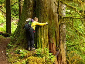 Tree Huggiing On Boulder River