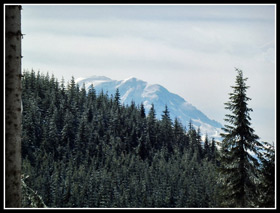 Mt. Rainier From Rattlesnake Mountain