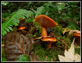 Mushrooms On Oyter Dome Trails