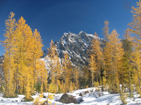 Mt. Stuart Framed By Larch