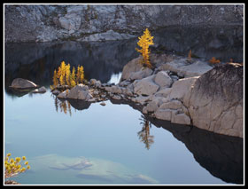 Larch Reflected In Crystal Lake